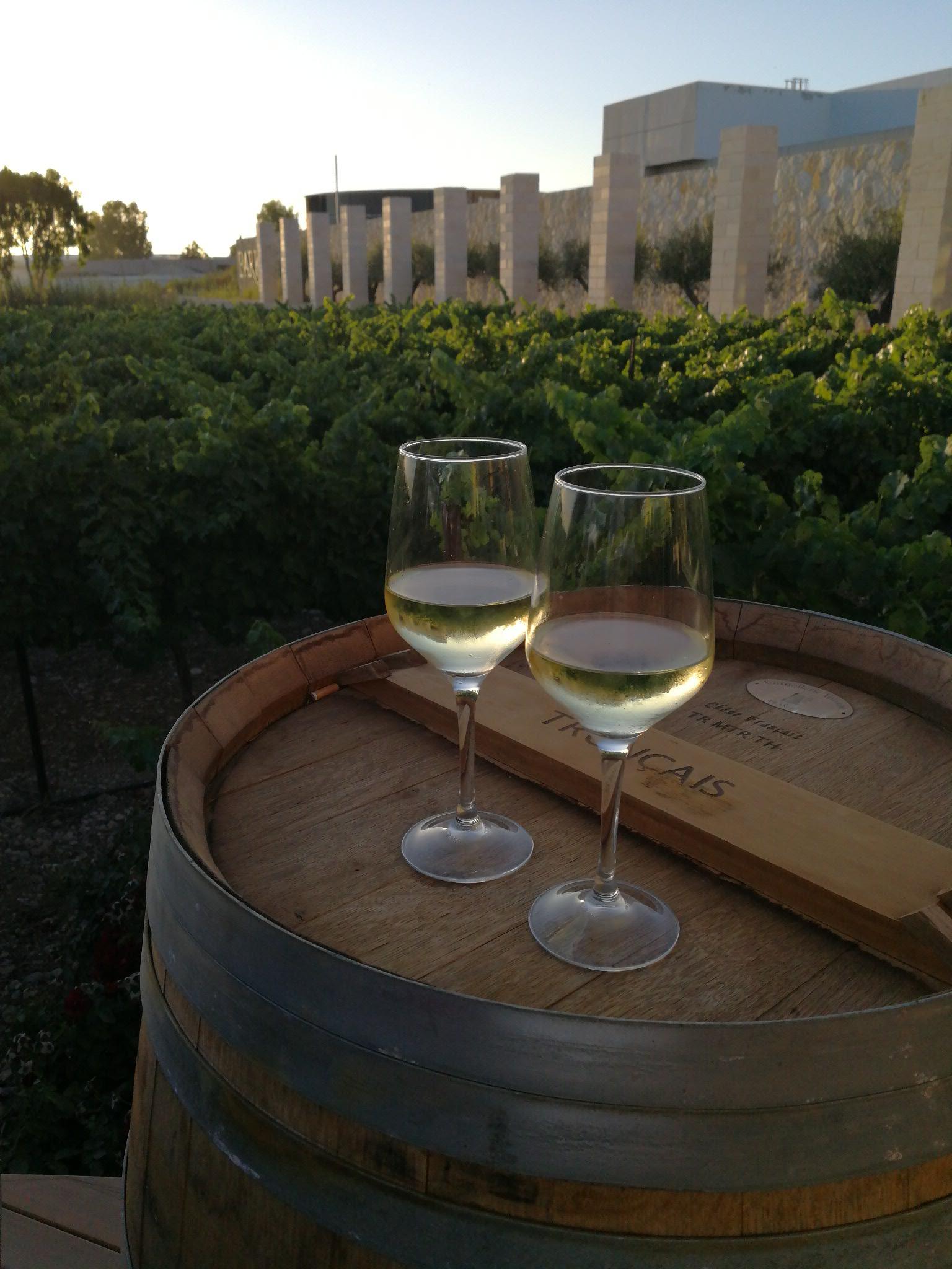 כרם ברקן | יינות במרפסת